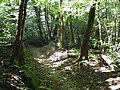 In the wood - panoramio.jpg