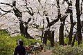 Inokashira Park 2009-04-05 (3446048201).jpg