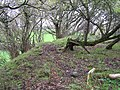 Inside the Fairy Ring - geograph.org.uk - 78835.jpg