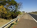 Ipê Amarelo (Tabebuia serratifolia) próximo a ferrovia na Rodovia Brigadeiro Faria Lima, SP-326 próximo a cidade de Bebedouro. - panoramio.jpg