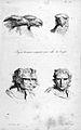 J.C. Lavater, L'Art de connaitre les hommes... Wellcome L0025294.jpg