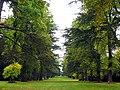 Jackson Avenue, Westonbirt Arboretum - geograph.org.uk - 69631.jpg