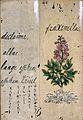 Japanese Herbal, 17th century Wellcome L0030077.jpg