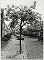 Japanse kers aan de Dutrystraat. NL-HlmNHA 54034148.JPG
