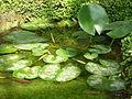 Jardin des plantes Paris Serre de l'histoire des plantes3.JPG