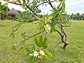 Jardins de Paofai - Papeete - panoramio (2).jpg