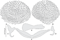 Journal.pone.0171392.g007 - Pseudorhabdosynochus enitsuji from Mycteroperca costae, squamodiscs and haptoral parts.png