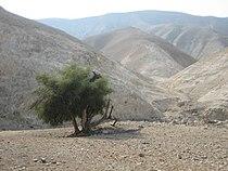 Judean Desert Wadi Qelt.jpg