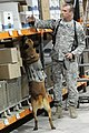 K-9 teams enjoy scent of training DVIDS266731.jpg
