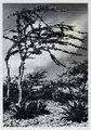 Kalebasboom en pilaplanten op Bonaire, KITLV 9959.tiff