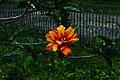 Kalimpong Flora and Fauna12.jpg