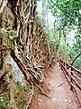 Karura forest path.jpg