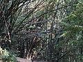 Khunkorn waterfall P1110732.JPG
