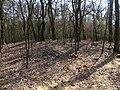 Klánovický les, u tvrze Slavětice.jpg