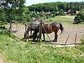 Koníčci na Papratné - panoramio.jpg