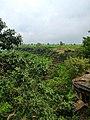 Kordara, Madhya Pradesh 485446, India - panoramio (3).jpg