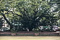KotaKinabalu Sabah Padang-Merdeka-01.jpg