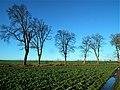 Krajobraz żuławski w okolicy Mątów Małych.jpg