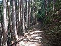 Kumano Kodo Kogumotorigoe World heritage80.JPG