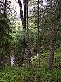 Kuusalu Parish, Harju County, Estonia - panoramio - Николай Семёнов (20).jpg