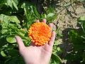 Kwiatuszek.JPG