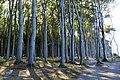 LSG Kühlung - Nienhäger Holz (Gespensterwald) (110).jpg