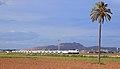 La palmera y el Talgo.jpg