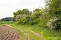 Lage - 2015-05-17 - LIP-085 Stadenhauser Mergelkuhlen (10).jpg