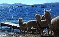 Lake Copacabana.jpg