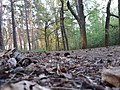Landschaftsschutzgebiet 14974 Ludwigsfelde Pechpfuhl 10.jpg