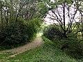 Landschaftsschutzgebiet Wäldchen bei Buer Melle Datei 14.jpg
