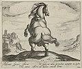 Landschap met paard uit Sardinië. NL-HlmNHA 1477 53011514.JPG