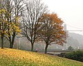 Last of the Autumn Leaves - geograph.org.uk - 1047632.jpg
