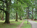 Laurelhurst Park trails 2011.jpg