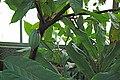 Le jardin botanique de Genève en hivers 04.JPG