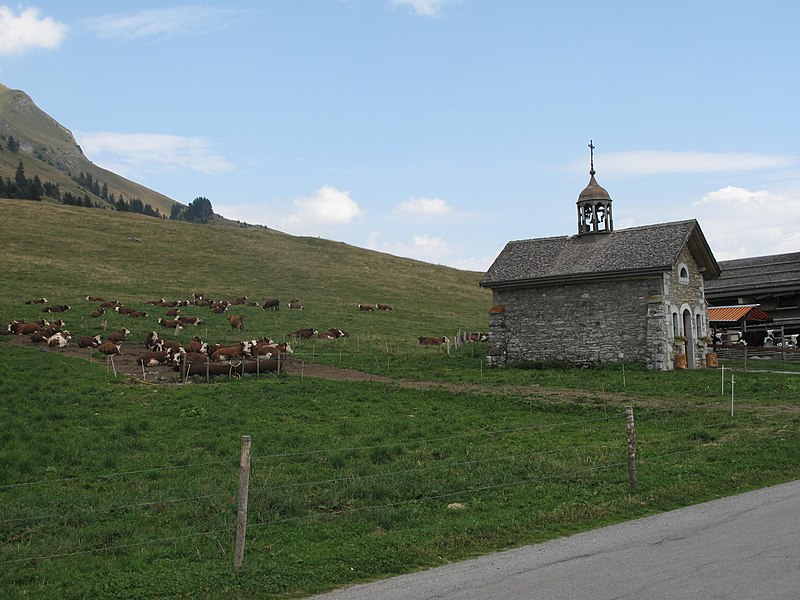 The chapel of les Aravis and a herd of Abondance cattle (Savoie, France).