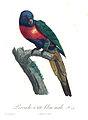 Levaillant Parrot 24.jpg