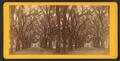 Live Oak Avenue, Bonaventure Cemetery, Savannah, Ga, from Robert N. Dennis collection of stereoscopic views 11.png