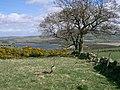 Loch Leven - geograph.org.uk - 163465.jpg