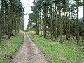 Lochmuir Wood - geograph.org.uk - 154692.jpg