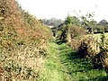 London Loop footpath east of Hadley Wood - geograph.org.uk - 983950.jpg