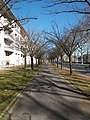 Lyon 9e - Quai Paul Sédallian, allée d'arbres.jpg