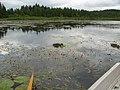 Märkälänlahti - panoramio.jpg
