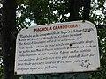 Magnolia histórica 1060348.JPG