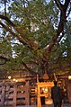 Mahabodhi Temple Complex, Bodhgaya (8716405171).jpg