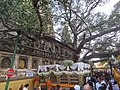 Mahabodhi temple and around IRCTC 2017 (80).jpg