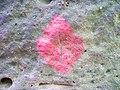 Malá Jestřebice, červený kosočtverec.jpg