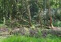 Mallebos het bekende bos van Spijkenisse.jpg