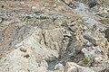 Manang - Annapurna Circuit, Nepal - panoramio.jpg