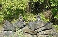 Marine Iguanas (47018867574).jpg